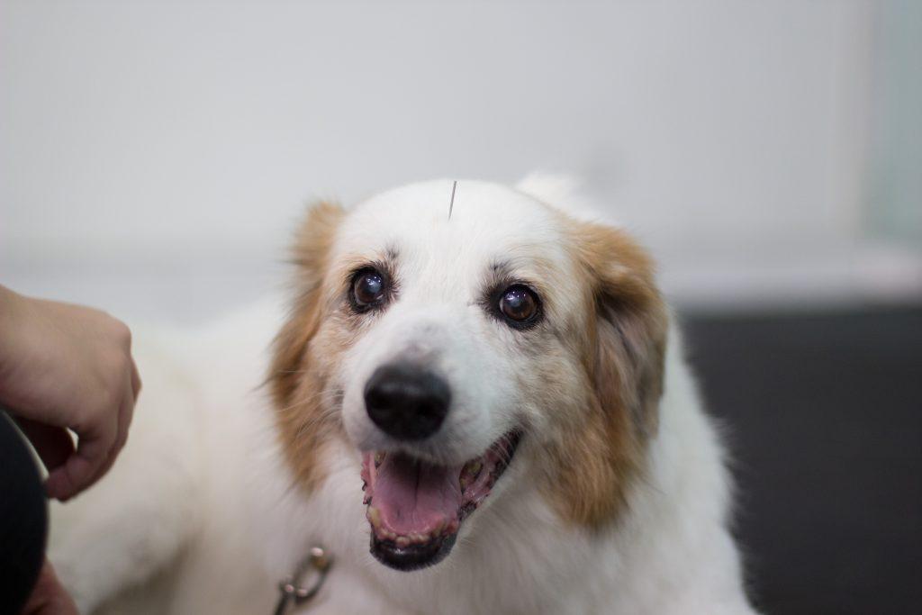 o que você precisa sobre Hérnia de Disco nos cães