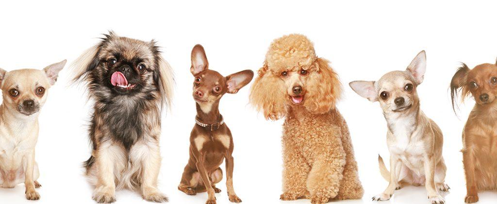 Animais de pequeno nas clínicas veterinárias