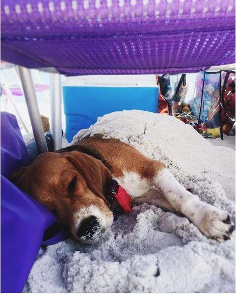 Cachorro dormindo na praia