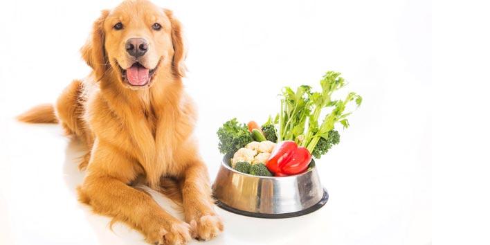 Petiscos saudáveis para cães