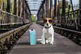 Cachorro como companhia para viajem