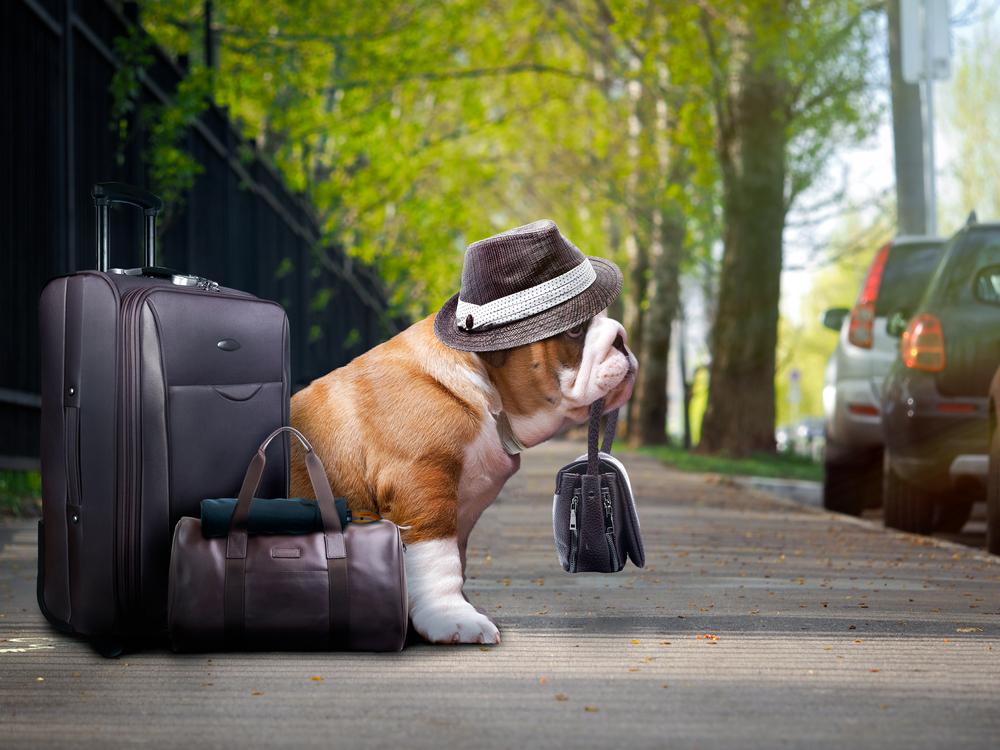 Cuidado ao viajar com animais