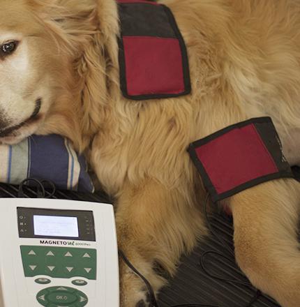 Fisioanimal - Eletroterapia